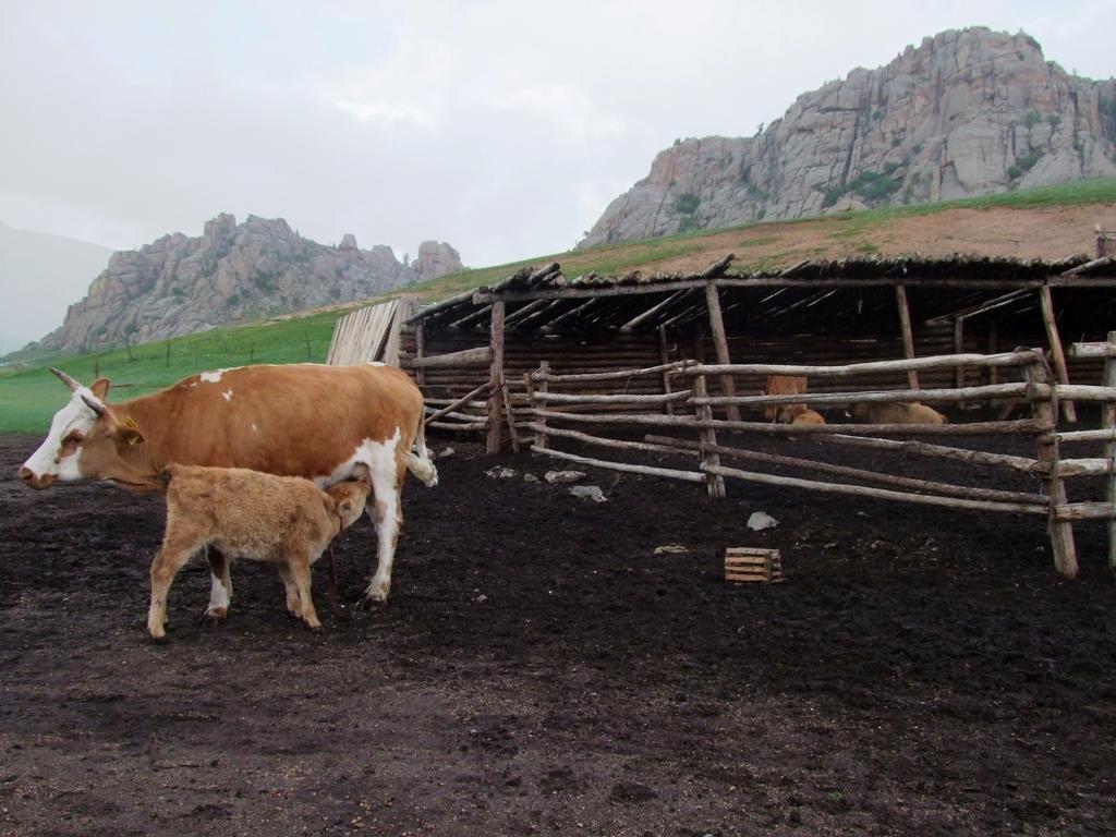 Dans la ferme des nomades.