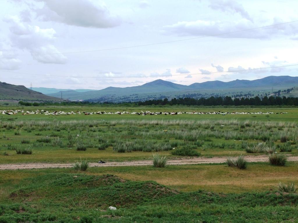 La grande plaine de la Mongolie.