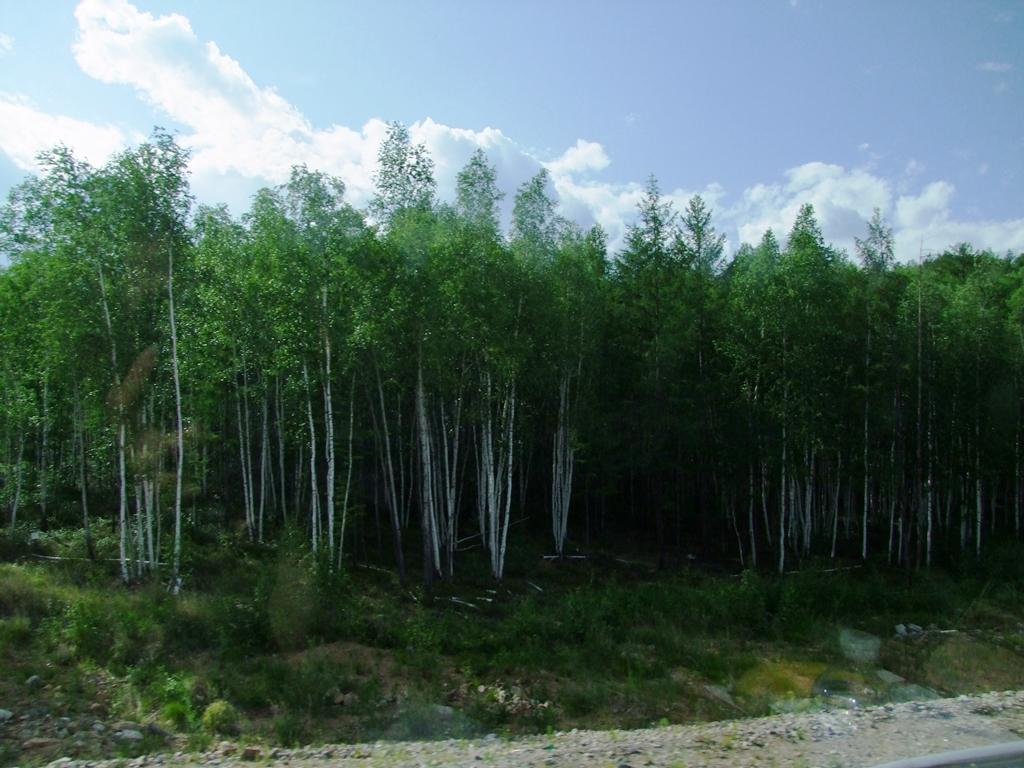 Le paysage change, le forêt de confères.