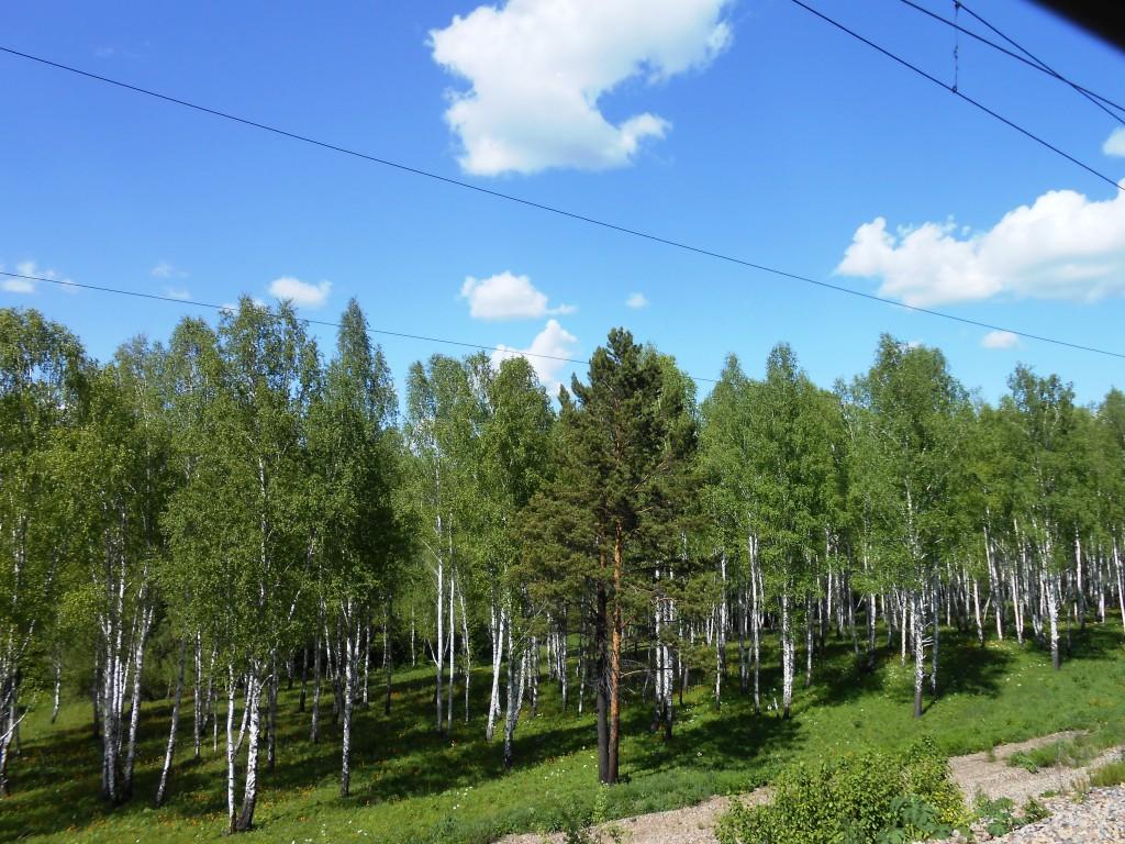 Panorama sur la route depuis le train.