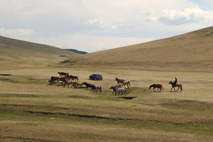 Mongolie20