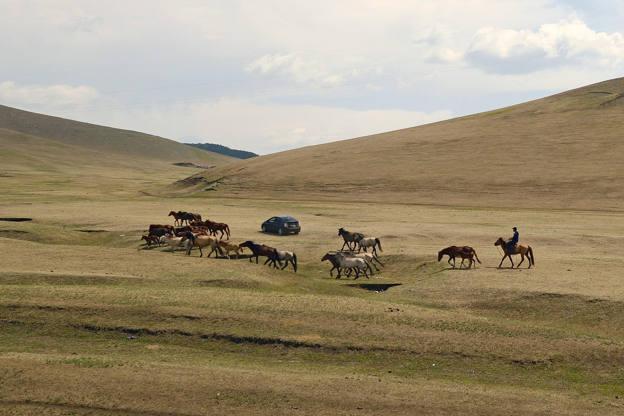 Mongolie20