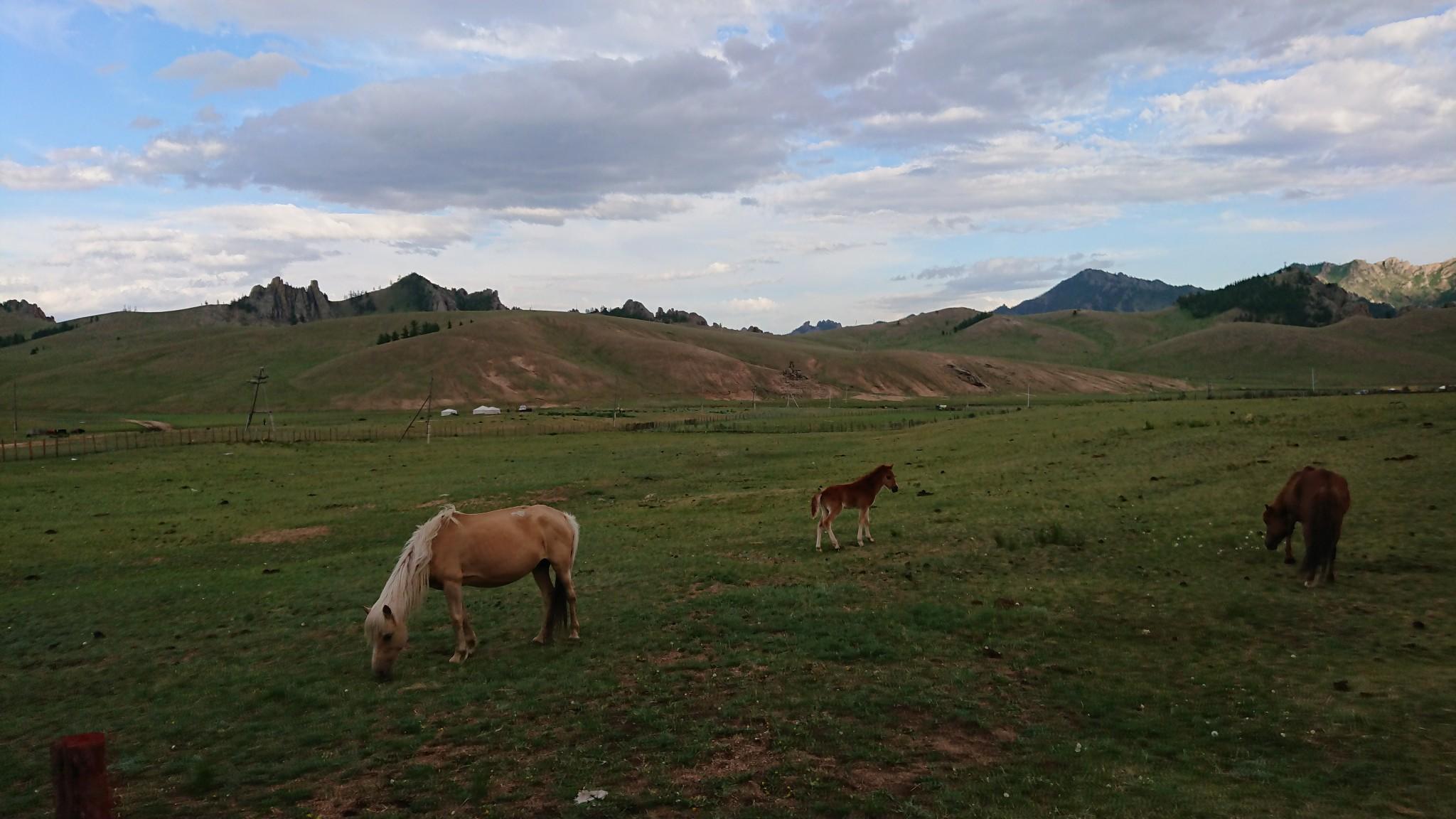 Mongolie48